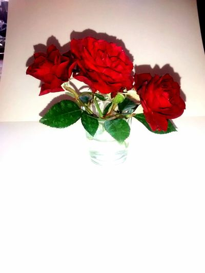 Flower Collection Flowers, Nature And Beauty Flowers,Plants & Garden Roses