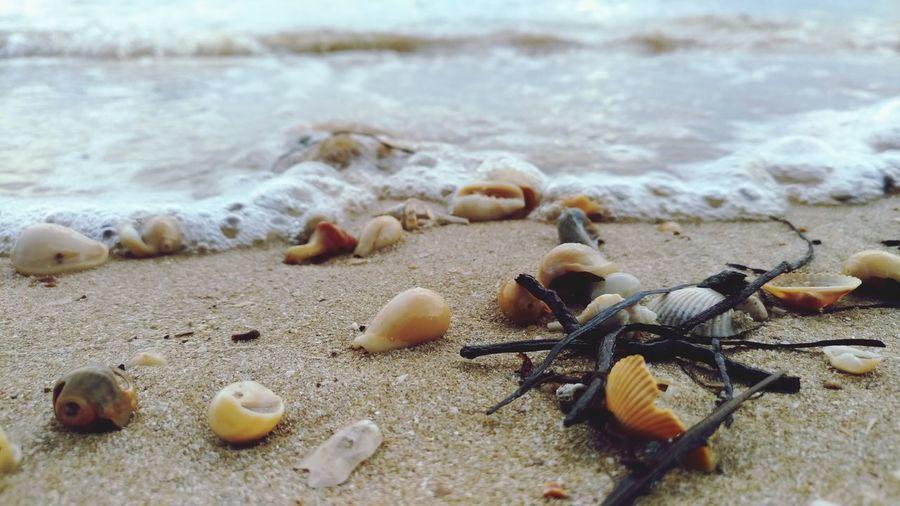 Wave Sea Life
