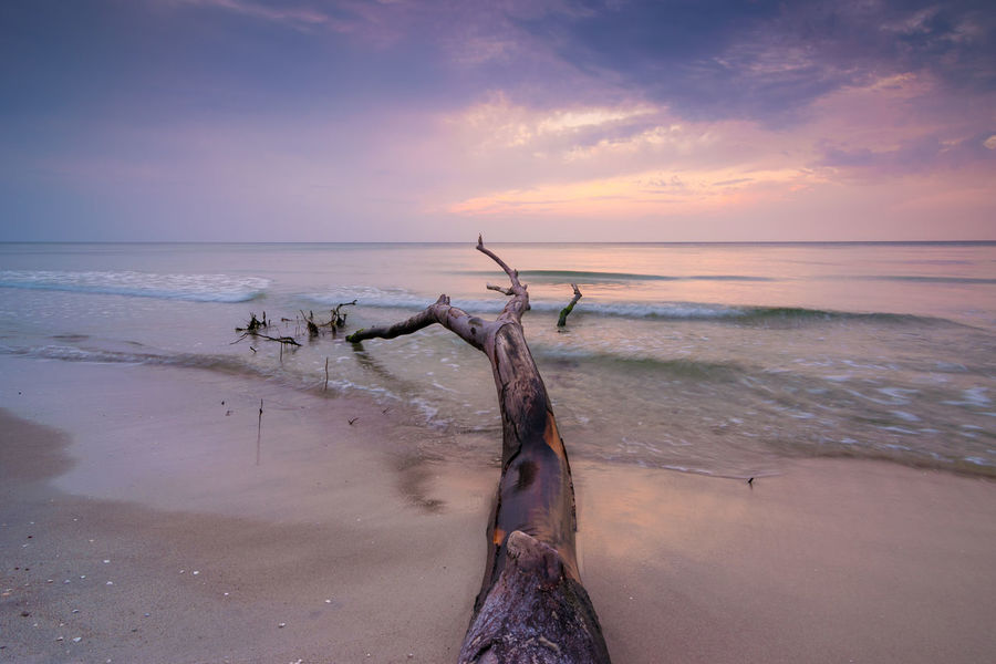 Dusk at the Baltic Sea in Germany Baltic Baltic Sea Darß Fischland Mecklenburg-Vorpommern Ostsee Twilight Weststrand Beach Darß Dead Tree Dusk Landscape Nature Outdoors Scenery Scenics Sea Shore Sky Sundown Sunset Tranquility Water Waves