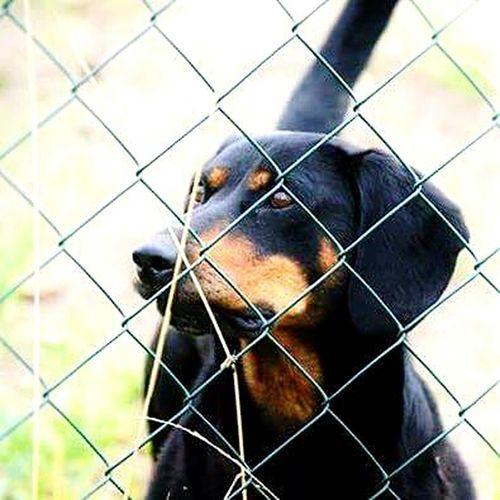 Dog Love Cute Pets Dog❤