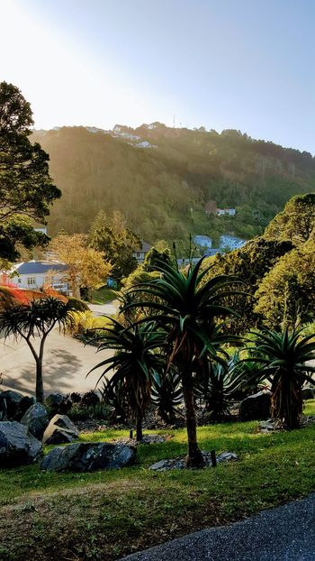 Agriculture Clear Sky Day Grass Growth Nature No People Outdoors Palm Tree Sky Tree Built Structure Trees Wellington  New Zealand Peaceful Adapted To The City New Zealand Architecture Architecture