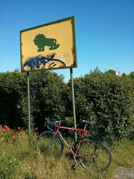 They say never leave your vehicule when crossing the reserve. Myfuckingberlin Lion Loewe Loewe-siedlung Sky Green Red flower Bike Peugeot