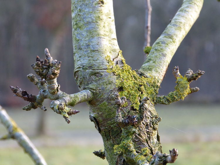 winter apple tree beauty ... :-) :-) :-) Apple Tree Apple Tree Branch Apple Trees Garden Beauty In Nature Branch Branch Of A Tree Close-up Day Fairytale  Fairytales & Dreams Focus On Foreground Fruit Garden Growth Lovely Nature Mossy Tree Nature No People Outdoors Tree Tree Buds Tree Face Tree Trunk Winter Garden Winter Tree Winter Wonderland