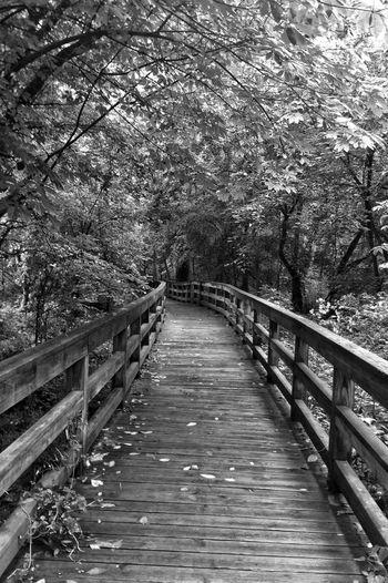 Blackandwhite Bridge Don't Be Square Nature