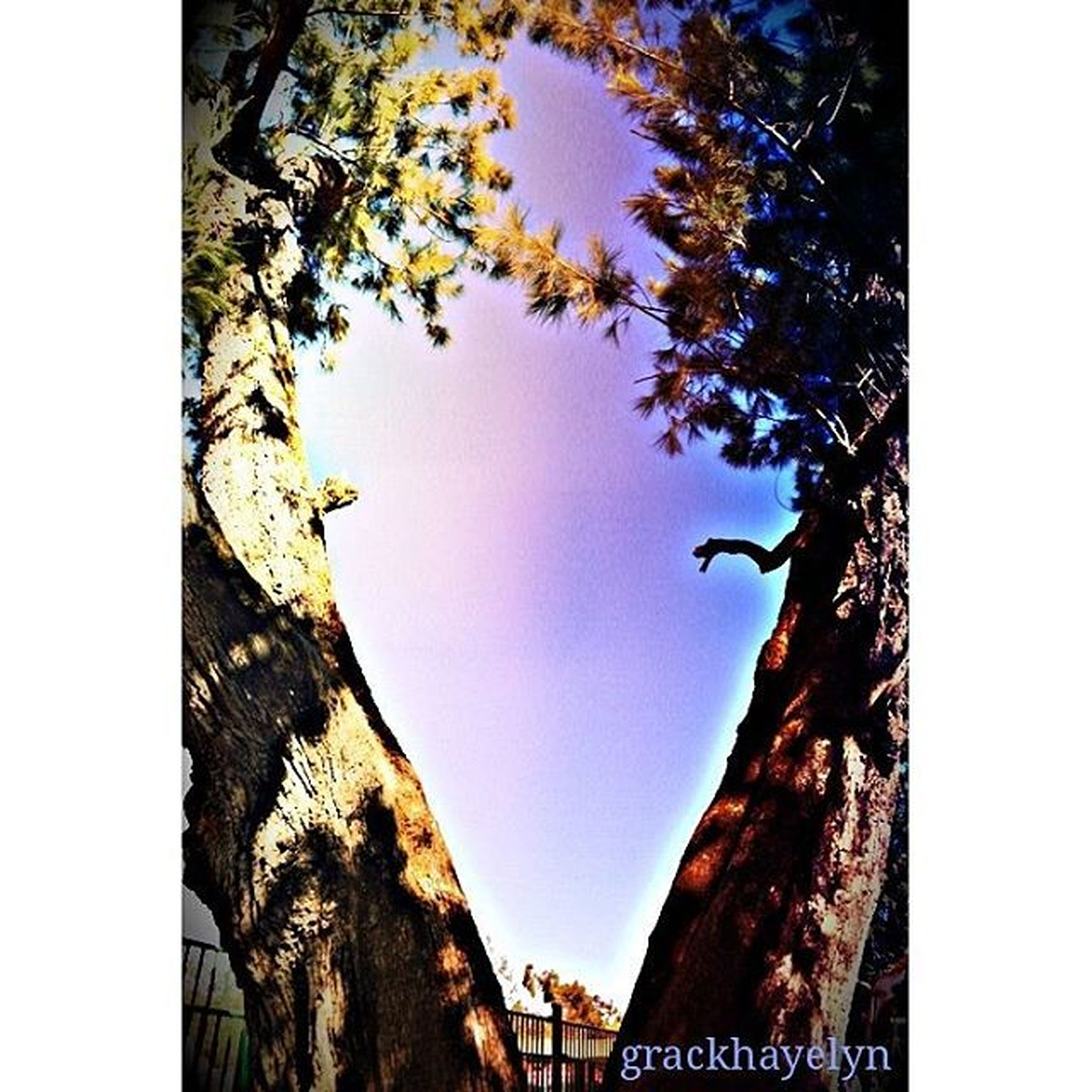 transfer print, auto post production filter, tree, low angle view, branch, clear sky, tree trunk, sky, nature, day, outdoors, no people, built structure, growth, building exterior, close-up, beauty in nature, sunlight, tranquility, architecture