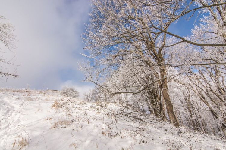 Tree Snow Nature Cold Temperature Winter Branch Beauty In Nature Sky Tranquility Outdoors Growth Day No People Scenics Tranquil Scene Bare Tree Hungary Borzsony Kéktúra