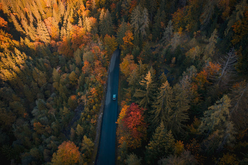 Aerial top down image of car driving on road winding through colorful forest.