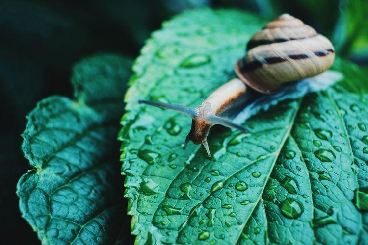 Rainy days is snail day