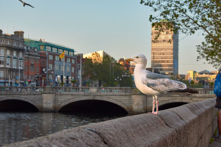 Seagull perching on a bridge