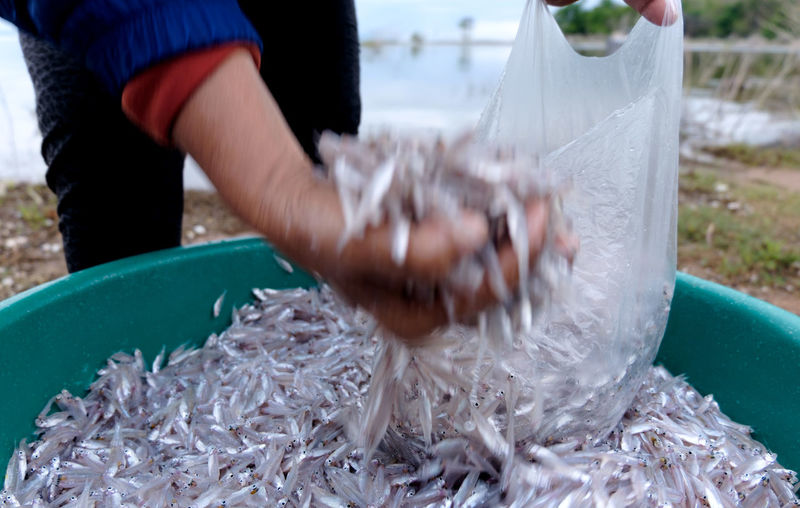 Cropped image of fisherman hand pouring spratts in plastic bag from container