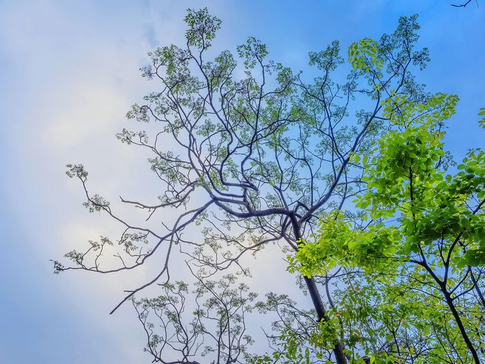 Tree Branch Nature Beauty In Nature Low Angle View Day Outdoors Sky Em Natural Lover Focus On Foreground A Moment Of Zen... Artistic Expression EyeEm Best Shots EyeEm Gallery Beauty In Nature Green Color Full Frame Leaf Plant No People Trees And Nature