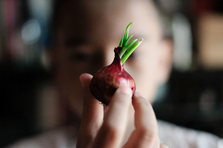 Close-up of boy holding onion at home