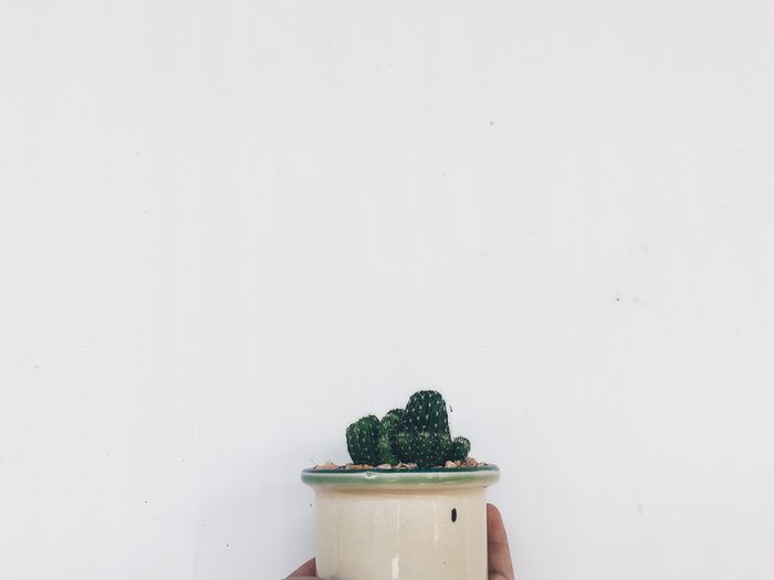 Copy Space Potted Plant Growth White Background Freshness Food And Drink Table Plant Indoors  Studio Shot No People Close-up Food Day