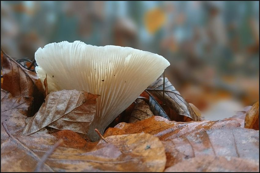 Pilz im Dezember Fungus 🍄 Forest Photography Philosophenwald Dezember Streamzoofamily EyeEm Selects Smartphonephotography Sony Xperia Photography. Pilz Close-up No People Day Beauty In Nature