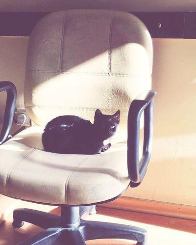 dark passenger :) Pets Indoors  Domestic Animals No People