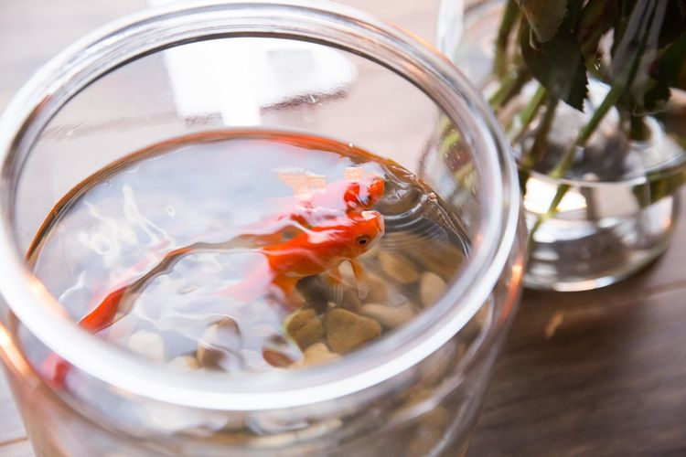 High angle view of goldfishes in bowl on table