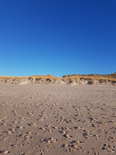 Sand Dune Clear Sky Desert Arid Climate Sand Blue Heat - Temperature Sunny Sky Landscape View Into Land Dry Dried Plant