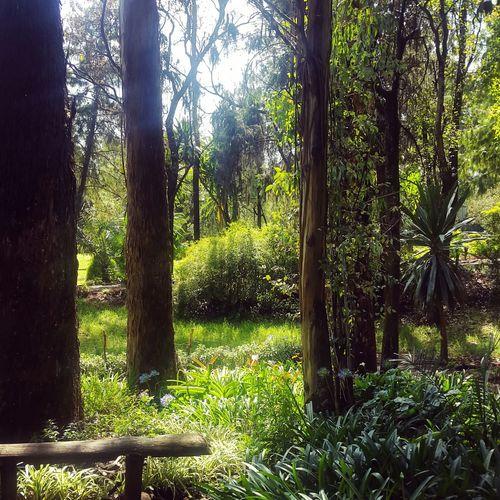 Nature Tree Forest Freshness Addis Ababa Eyemphotos Phonecamera Ethiopia Sunny Afternoon Eyemphoto Green