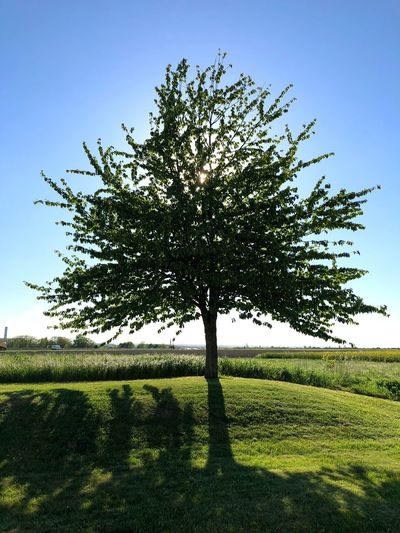 Shining tree Smartphonephotography Green Shining Tree Sun Plant Growth Tree Sky Field Beauty In Nature Nature Landscape No People Sunlight