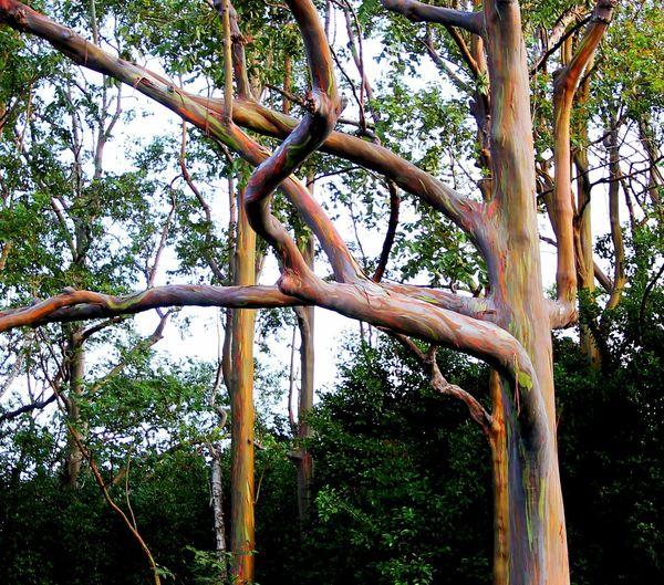 Rainbow Trees!