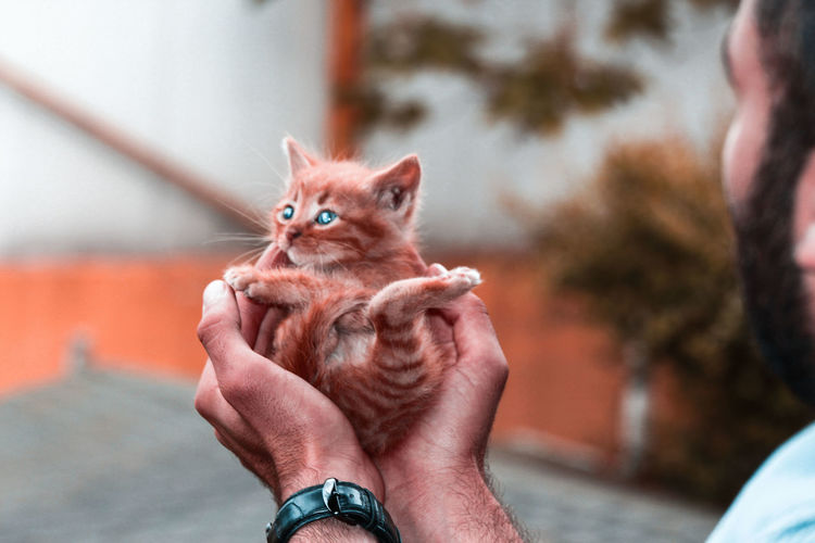 Close-up of hand holding kitten