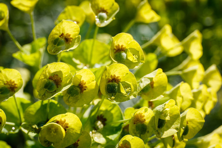 Beauty In Nature Beginnings Close-up Day Flower Flowering Plant Focus On Foreground Fragility Freshness Green Color Growth Leaf Nature No People Outdoors Plant Plant Part Sunlight Vulnerability  Yellow