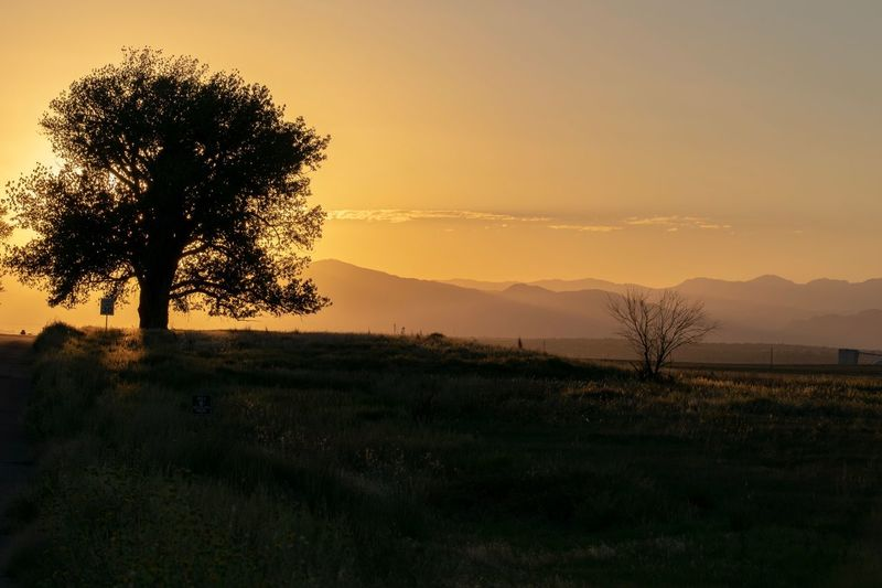Sunset, Silhouettes and Mountains Tree Plant Sunset Sky Tranquil Scene Beauty In Nature Tranquility Landscape Silhouette Idyllic Mountain Scenics - Nature Field