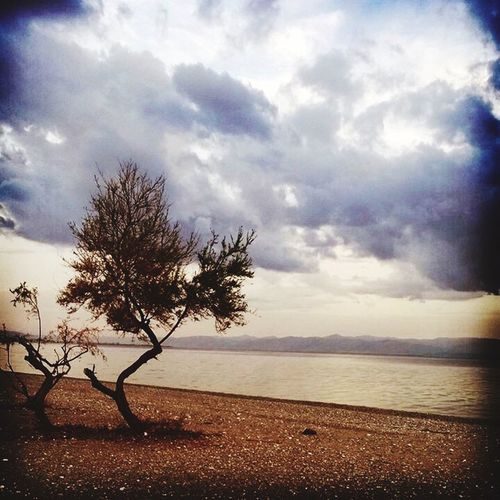 Sky Nature Tranquility Cloud - Sky Beauty In Nature Sea Tree Outdoors Beach No People