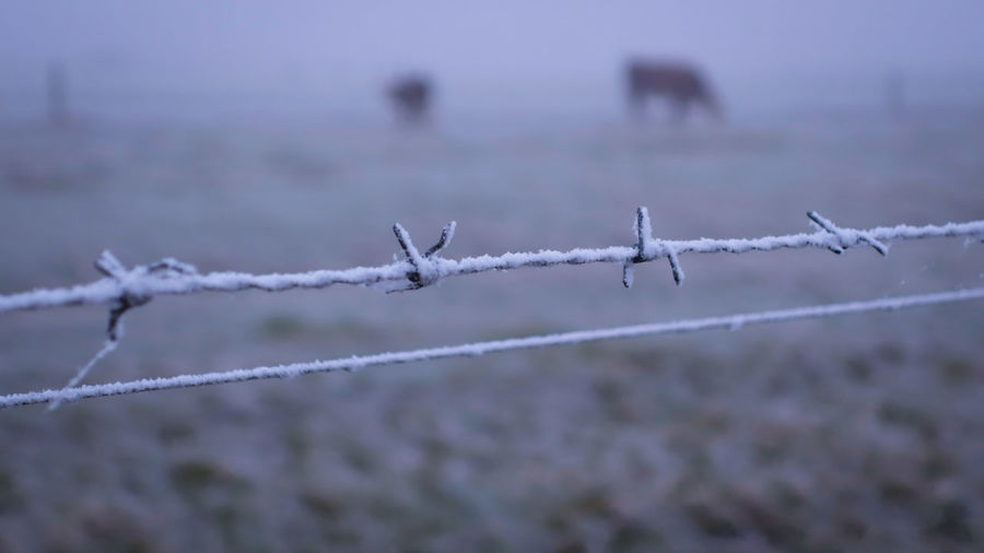 Snow Winter Fence Barbed Wire Cold Temperature Nature No People Day Outdoors Close-up Match - Sport Maasland