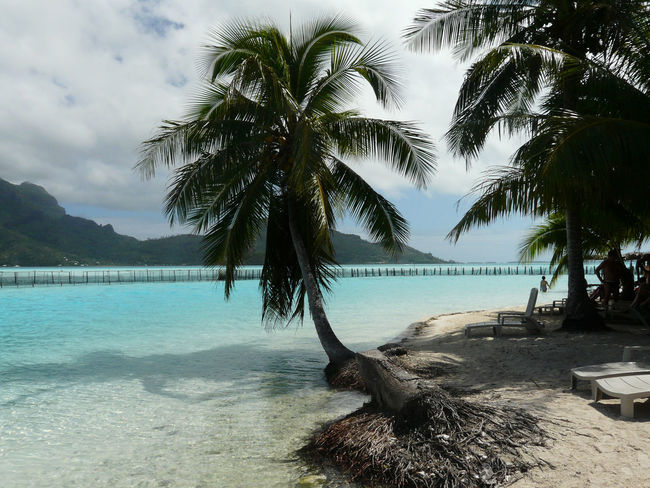 Polynesia Beach Beauty In Nature Day Growth Nature No People Outdoors Palm Tree Scenics Sea Sky Swimming Pool Tree Tree Trunk Water