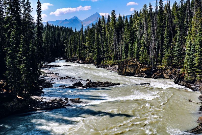 Yoho National Park Beauty In Nature Water Tree Plant Scenics - Nature Mountain Nature No People Tranquil Scene Tranquility Outdoors Flowing Water Forest River Canada