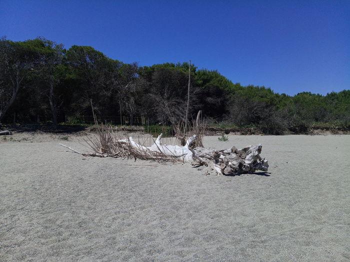 Bois Flotté Canet En Roussillon Sea Sea And Sky Sandy Beach Tree Water Beach Sand Clear Sky Sky Animal Themes