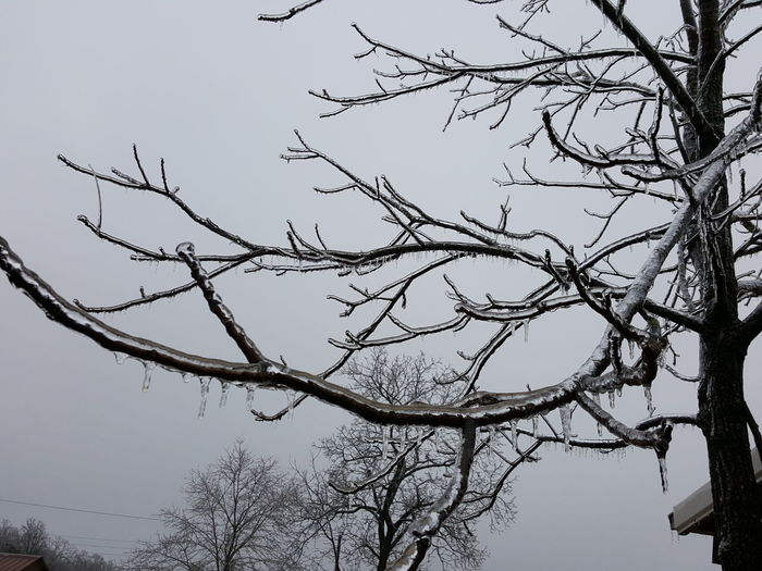 Tree Nature Ice Icy Tree Branches Icy Trees Winter Wintertime Winter Trees Ice Storm 2017
