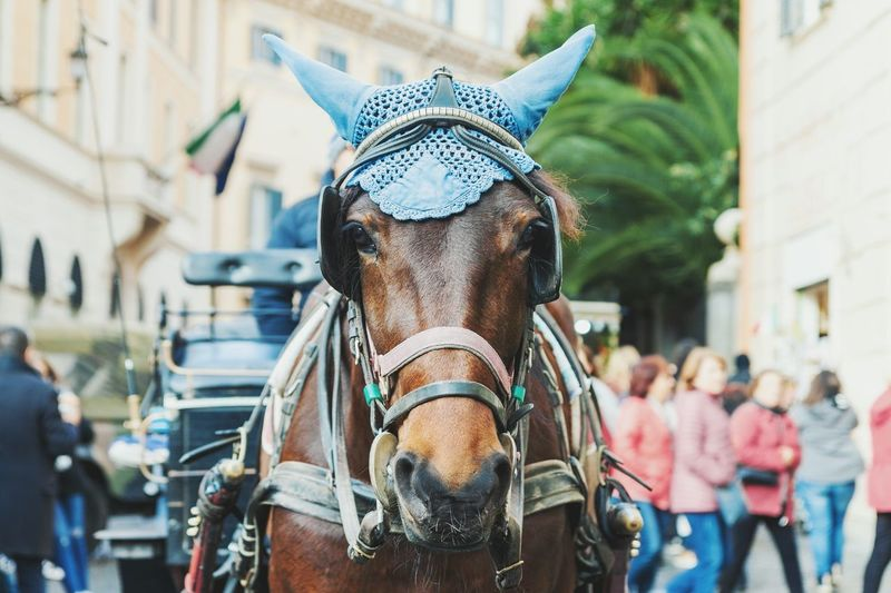 Horse One Animal Mammal Day Animal Themes Outdoors Portrait Close-up Horse Photography  Horse Drawn Carriage Horse Cart City Rome Decorated Horse Animal Attraction Tourism Attraction Tourism Look Looking Domestic Animals The Week On EyeEm Moving Around Rome