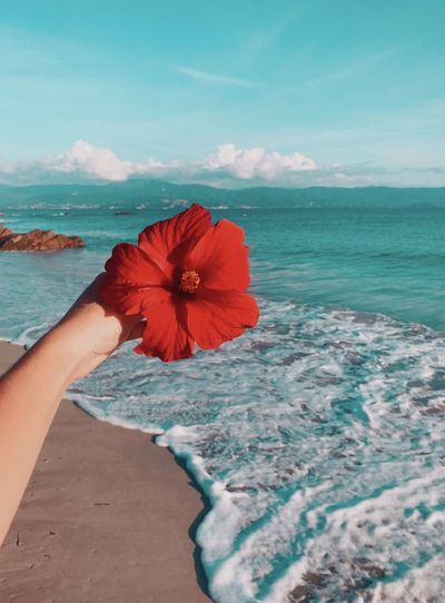 Cropped hand of woman holding red hibiscus at beach against blue sky