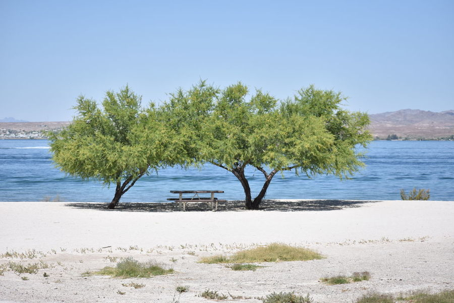 Beach Water Tree Sea Sand Nature Tranquil Scene Sky Tranquility Blue Water's Edge Scenics No People Landscape Beauty In Nature Clear Sky Outdoors Day Horizon Over Water