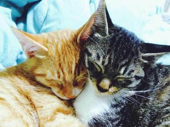 Pet Portrait Cats Of EyeEm I Love My Cat Sleeping Cats I Love My Cats  Lovable Cute Pets Cute