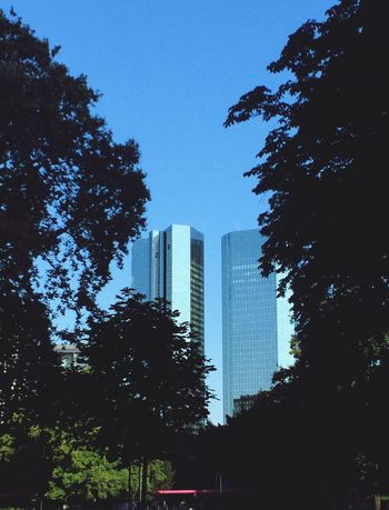 Good Morning Frankfurt Tree Building Exterior Architecture City Built Structure Low Angle View Branch Skyscraper Silhouette Clear Sky Growth Tall Tall - High Blue Building Story Tower Sky Dark Outline Day Deutsche Bank From My Point Of View Frankfurt Am Main This Morning This Moment
