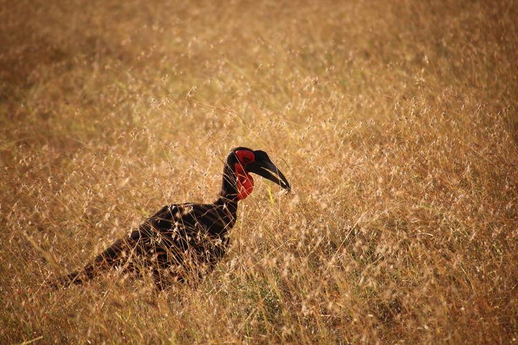 Pelican amidst grass