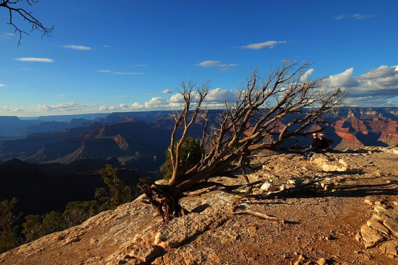 Leafless tree on the edge of a cliff with a view of the Grand Canyon Erosion Cliff Edge Grand Canyon Leafless Tree Autumn Sky Scenics - Nature Beauty In Nature Tranquility Mountain Tranquil Scene Plant Cloud - Sky Nature Non-urban Scene Sunlight No People Tree Day Environment Landscape Growth Mountain Range Land Idyllic