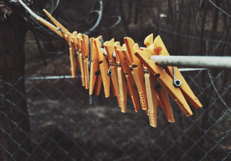 Close-up of orange clothespins hanging from wire