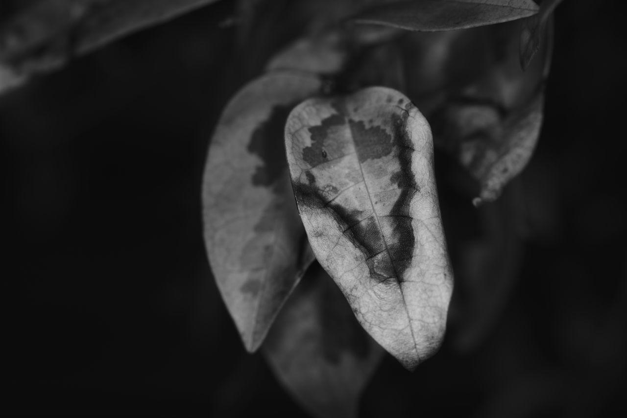 CLOSE-UP OF HEART SHAPE HAND