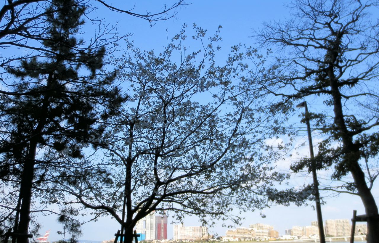Flower Tree With Cityscape In Background