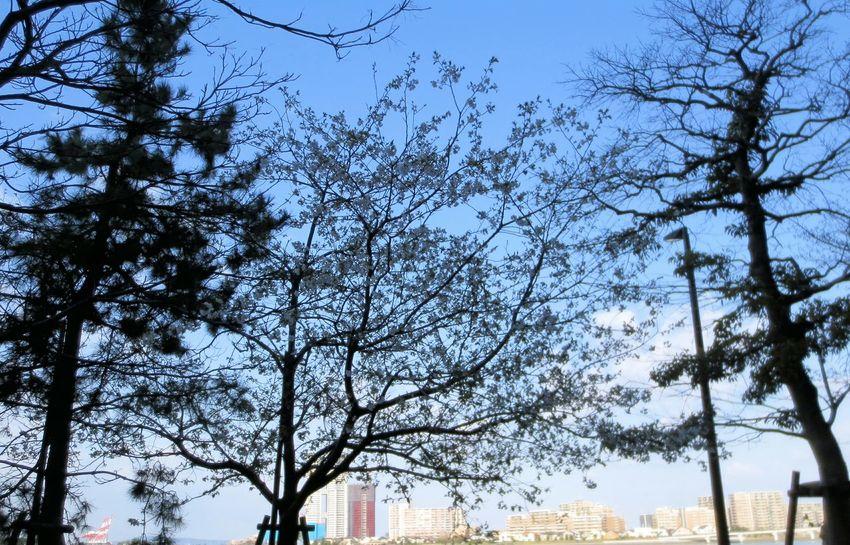 いつもの通勤風景😉 Taking Photos Enjoying Life Silhouette Silhouettes シルエット部 Tree Silhouette Silhouette_collection Sunset Silhouettes Landscape Landscapes