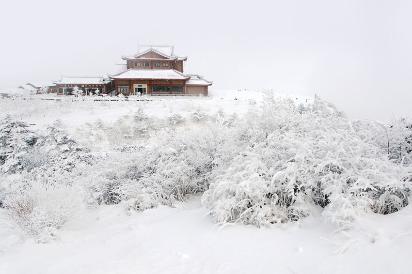 Winter wonderland on top of the Mount Emei, China No People Climate Zero Degrees Temple Building Cold Snow Snowing ❄ Freezing Ice Winter Winter Wonderland Architecture Cold Temperature Building Exterior Buulding Structure Mountain Mount Emei Sichuan Chengdu China Airasia Airasiax Buddhism Buddha EyeEm Selects