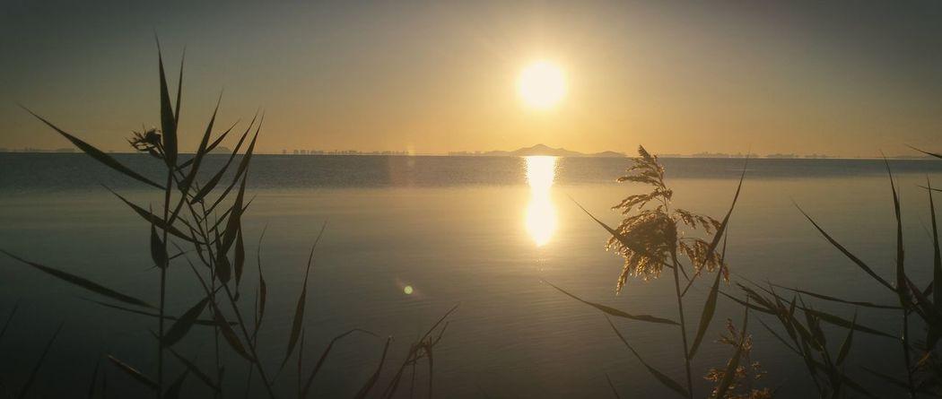 Water Sunset Sun Tranquil Scene Reflection Orange Color Sky Growth Sea Los Alcázares Mar Menor