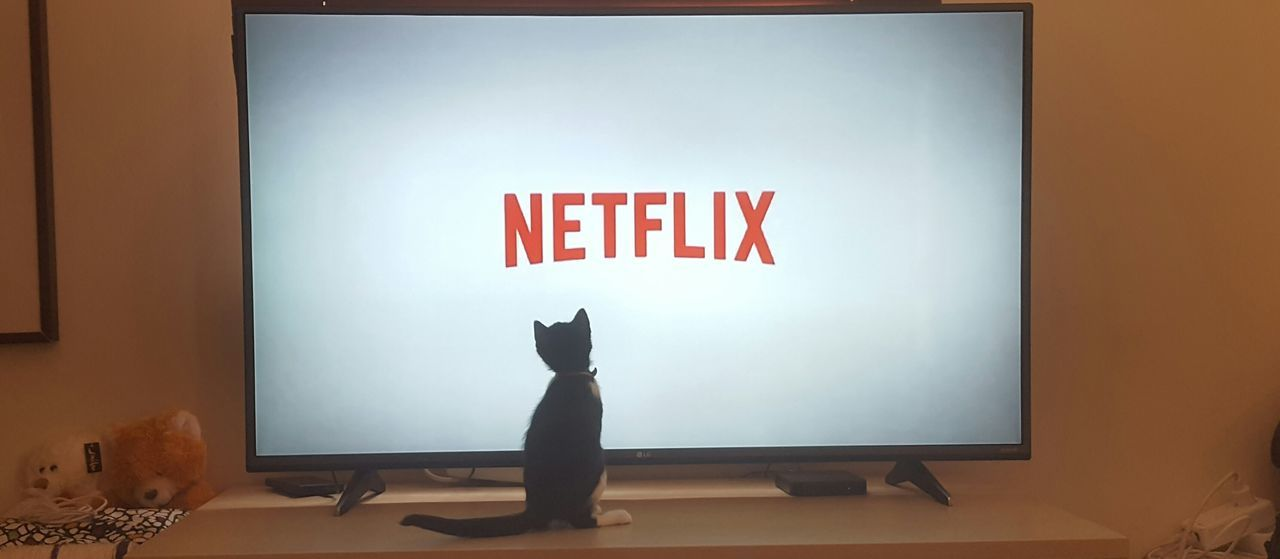 indoors, domestic cat, technology, one person, full length, mammal, domestic animals, animal themes, day, people