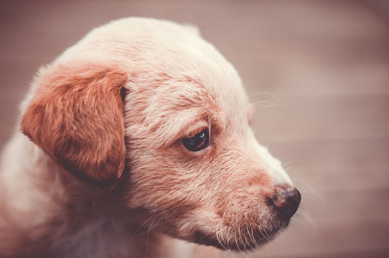 Cute Pets Animal Themes Close-up Cute Animals Cute Dog  Dog Domestic Animals Focus On Foreground One Animal Pets Puppy
