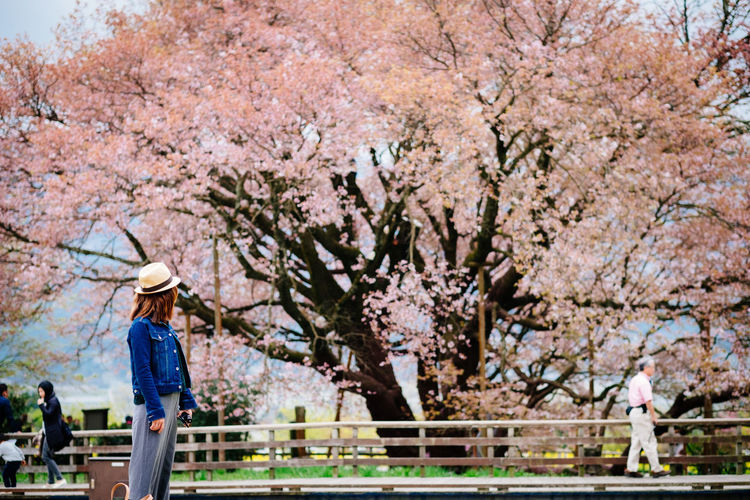Woman standing by cherry blossom tree in park