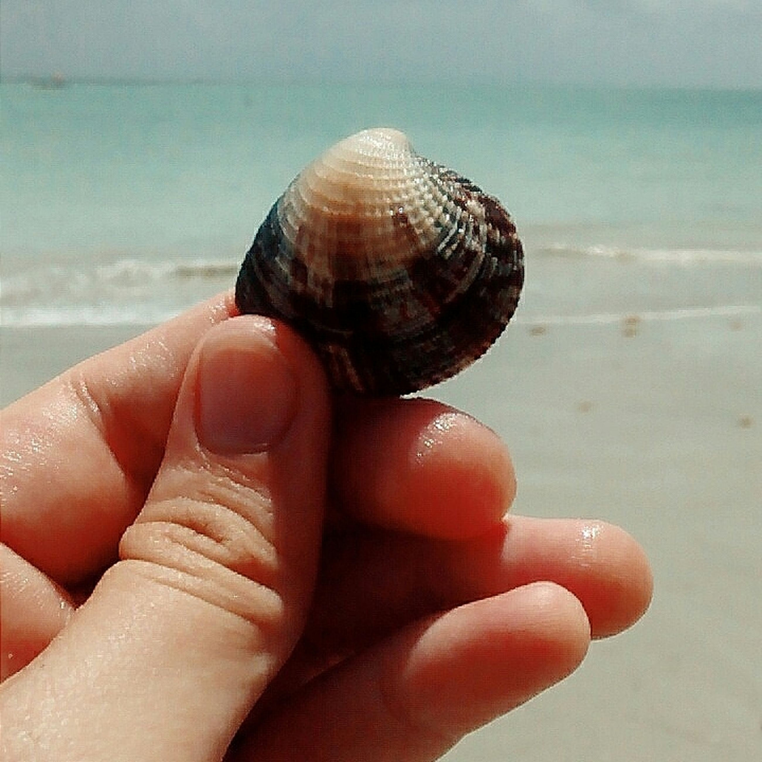 person, holding, beach, part of, personal perspective, human finger, sea, cropped, focus on foreground, unrecognizable person, close-up, sand, animal shell, seashell, horizon over water, lifestyles, leisure activity